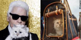 Karl Lagerfeld con la sua gatta Choupette